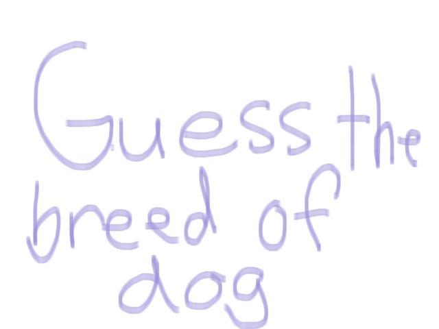 Dog Quiz by Kaitlyn Curley