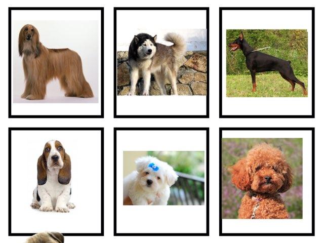 Dogs And Mammals  by Escola lápis de cor
