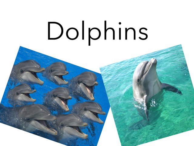 Dolphin 101 by Kristin Meadows