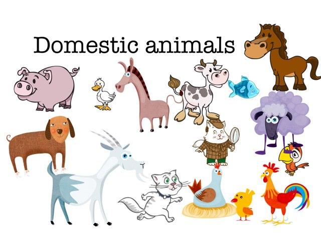 Domestic Animals by Valeria Ferradas