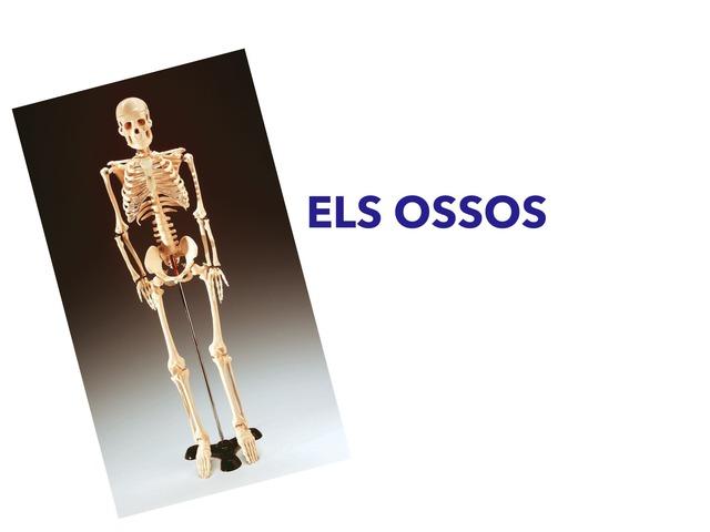 ELS OSSOS by Mireia Romero Solé