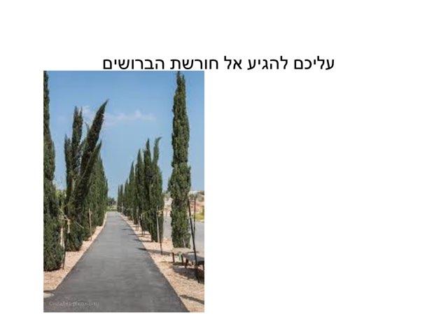 חפש את המטמון  פארק אריאל שרון by ilana voronin