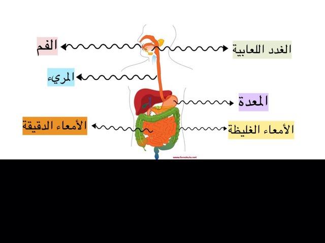 الجهاز الهضمي - خامس by Noura Alshrifi