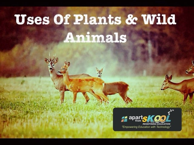 Uses Of Plants And Wild Animals by TinyTap creator