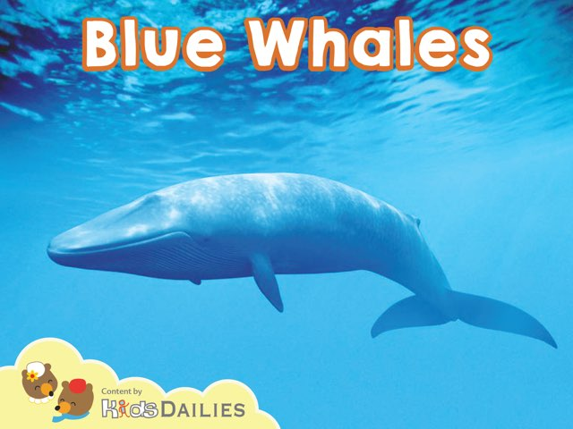 Blue Whales by Kids Dailies