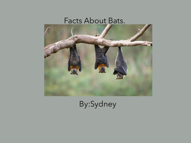 Bats By Sydney by Hulstrom 1st Grade