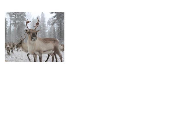 Daniel's Reindeer game  by Gemma Clarke