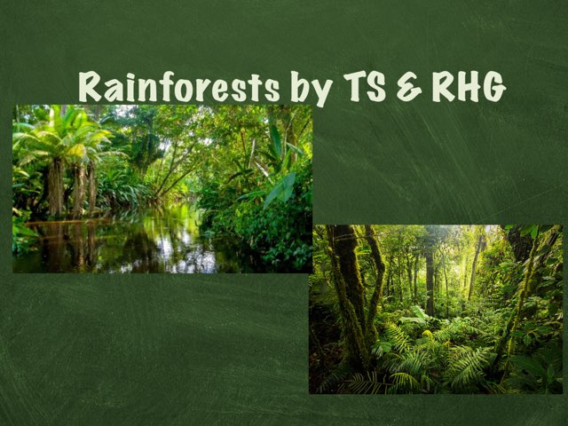 Rainforests By TS And RHG by Holy Spirit