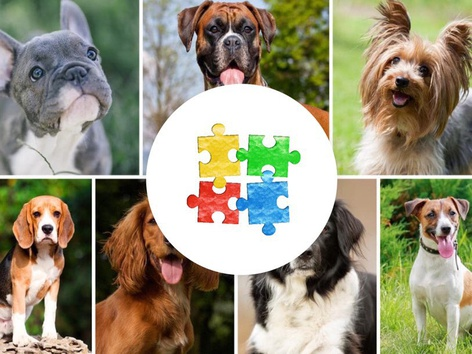Dog Puzzles 🐶 🐕  by Yam Goddard