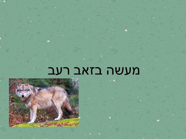 מעשה בזאב רעב by מכללה תלפיות