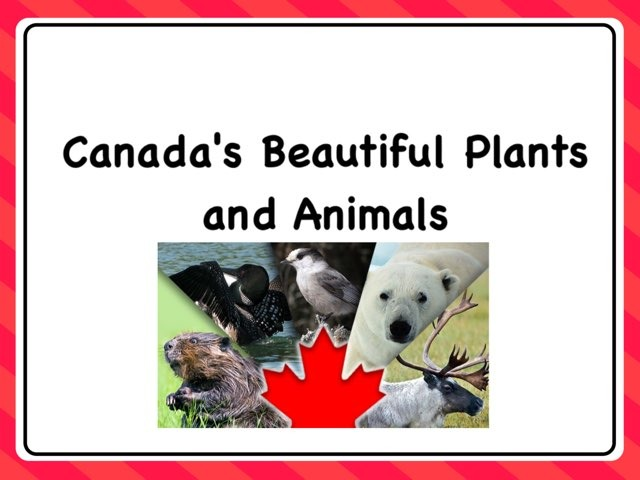 Canada's Beautiful Plants And Animals by Michelle So