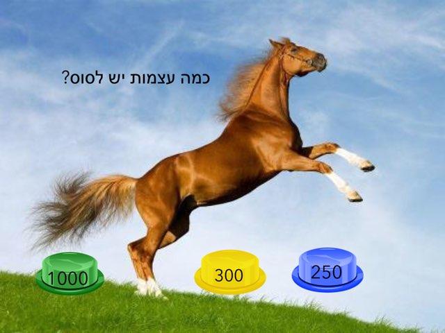 אורי סוסים by בית ספר קישון