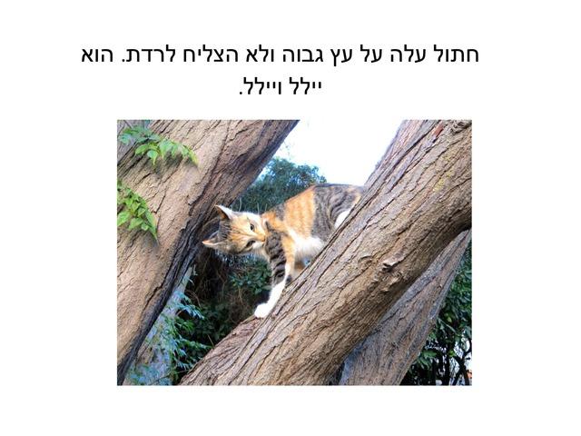 אבי מציל חתול שעלה על עץ by Varda Lavi