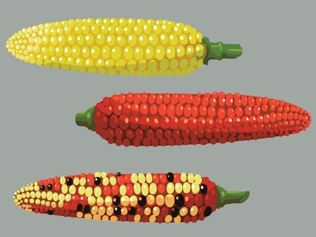 Corn by Alyssa Clark