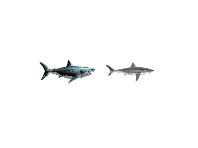 Shark game by Cathy davis