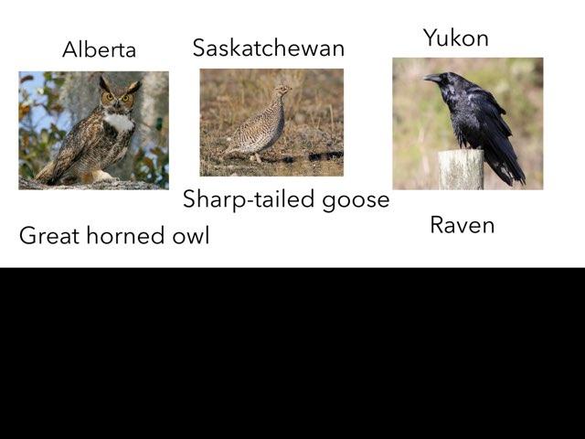 Saskatchewan Game  by 3NM iPad