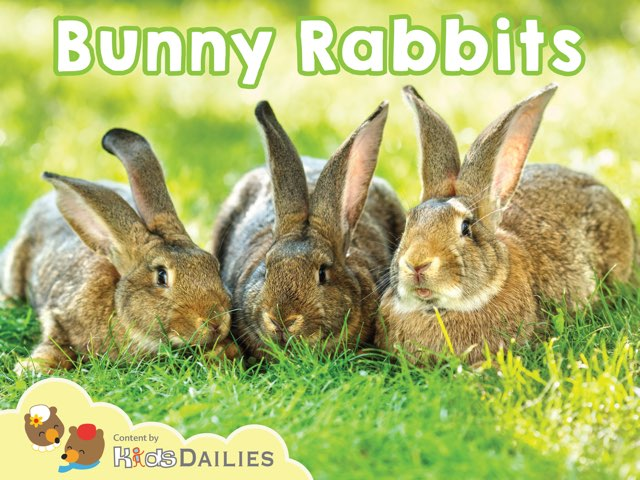 Bunny Rabbits by Kids Dailies