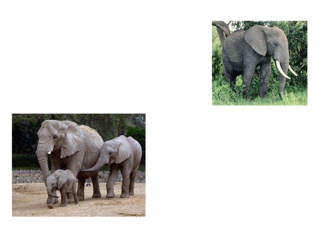 חיות יחיד רבים by Sharon Hodor