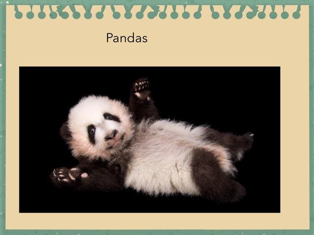 Pandas By Alex by Hulstrom 1st Grade