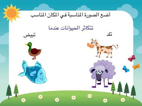 التكاثر by Abla Nooof