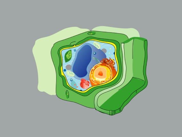 عضيات الخلية  by وردة التفاؤل