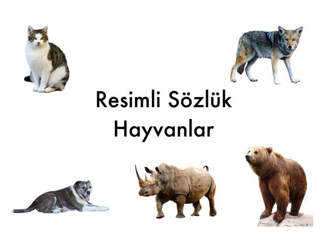 Resimli Sözlük -Hayvanlar by Hadi  Oyna