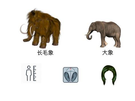 对比 大象 长毛象 by Xl