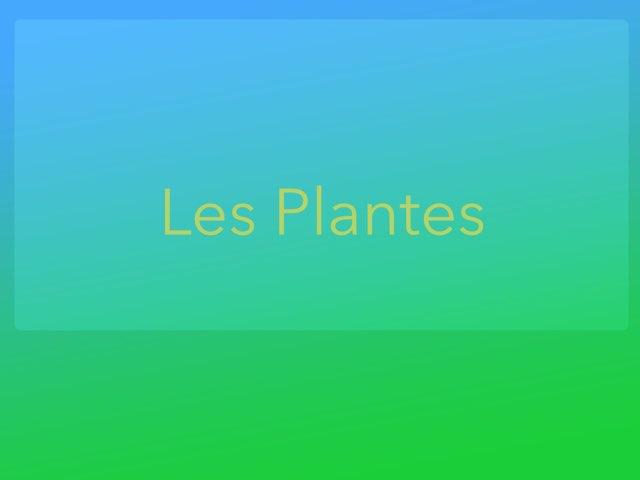 Les plantes by Sergio CRIADO REIG