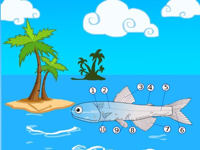 Fiskens Delar by Malin bennet