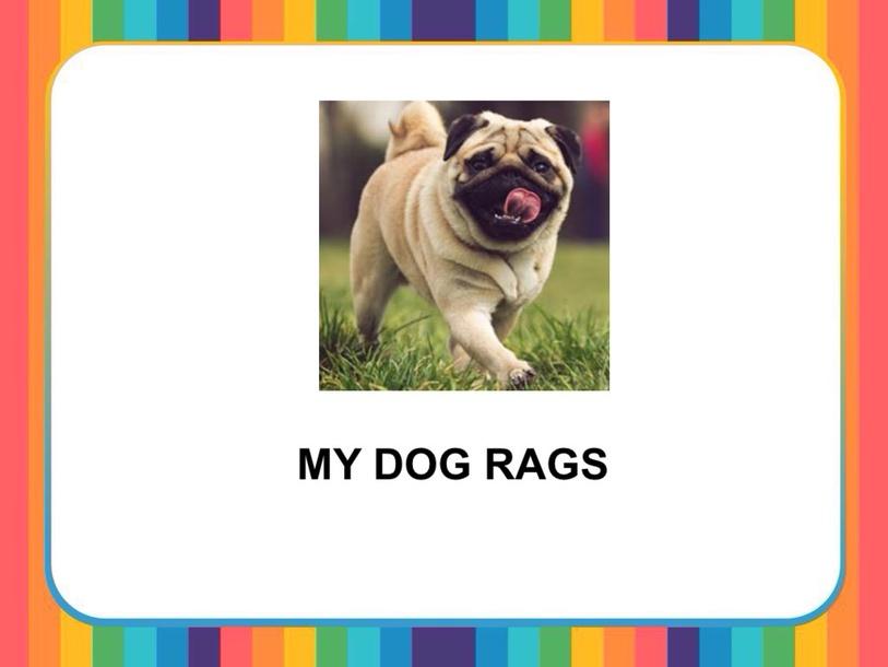 MY DOG RAGS by Camila Dias