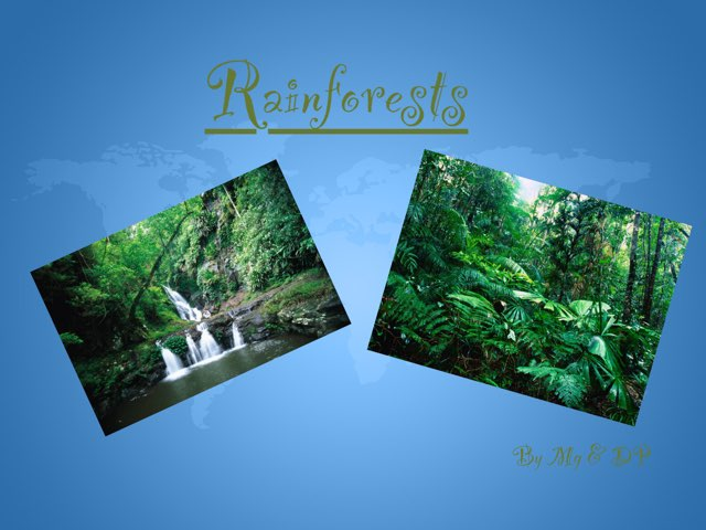 Rainforests by Holy Spirit