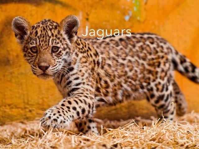 Jaguars by Aina Sevillano