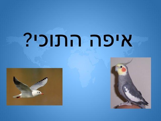 חיות יניר  ליאב by בית ספר קישון