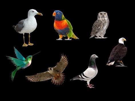 Identify Birds by Sarah Dominek