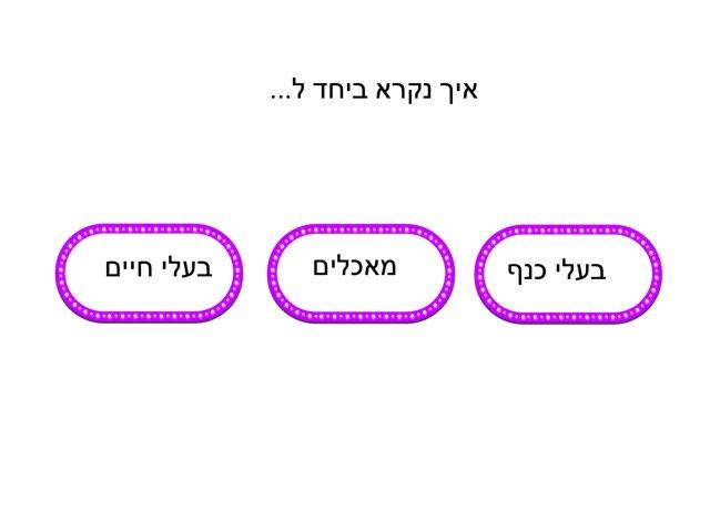 הכללה by יותם מור יוסף