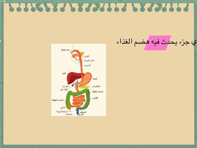 الجهاز الهضمي by Ebtesam Khaibary