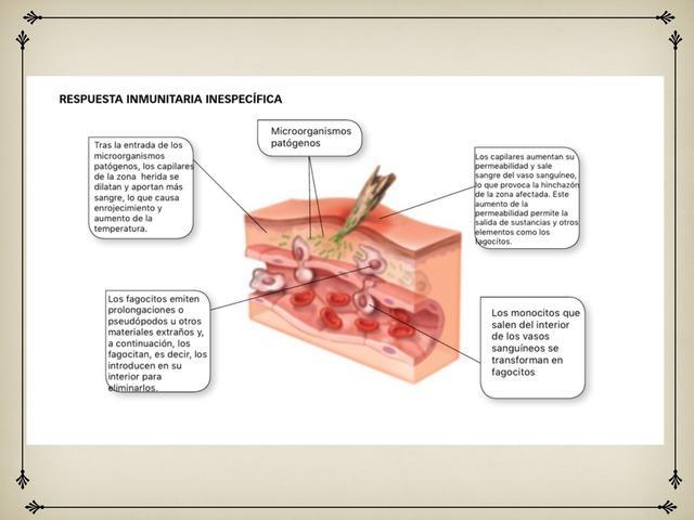 Sistema Inmunitario by Andrea Berodia Barea