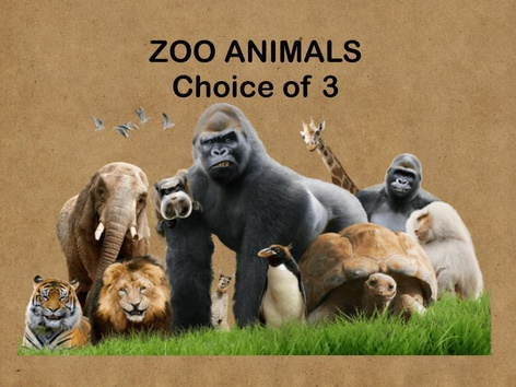 Identify Zoo Animals  by Teresa Grimes