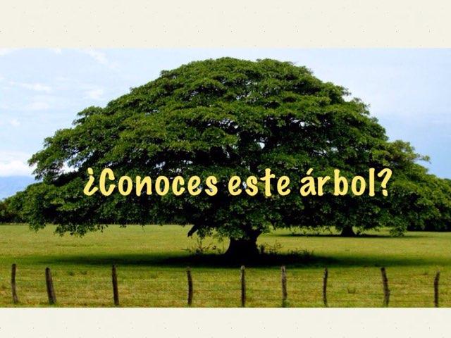 Árboles by Cristina Villalobos Slon