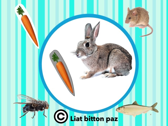 Animals And Their Food - Part 2 by Liat Bitton-paz