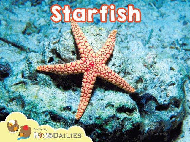 Starfish by Kids Dailies