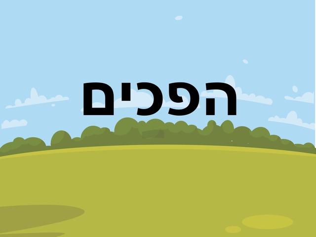 הפכ-לה-לה by צליל מרדכי
