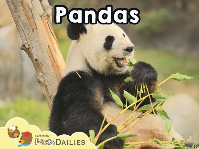 Pandas by Kids Dailies
