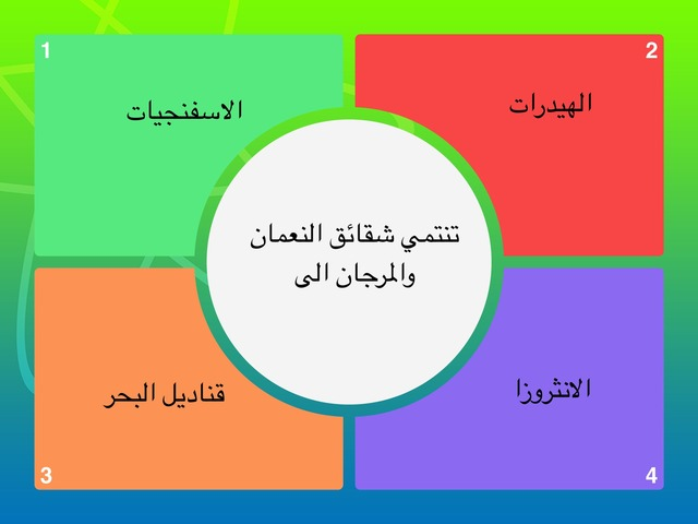اللاسعات  by Zooz Ali