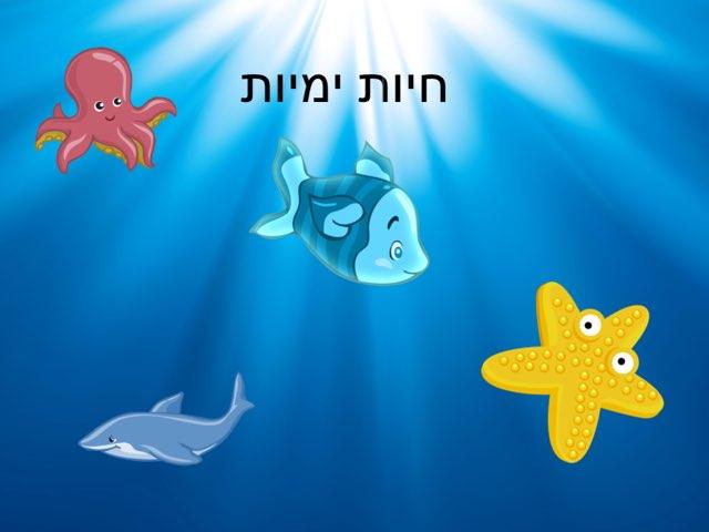 חיות ימיות by הילה שמש