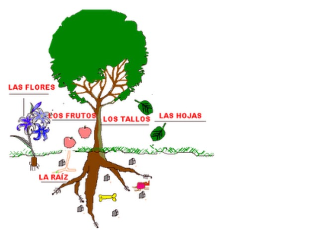 Partes Das Plantas by Maysa Oliveira