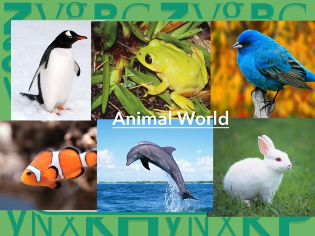 Animal World by Gal it Polonski