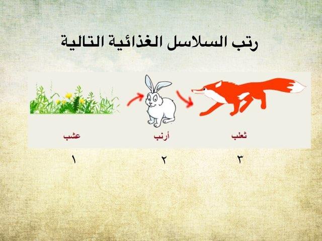 سلسل غذائية by Altaf Alotaibi