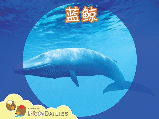 一起来学习关于蓝鲸的知识吧! by Kids Dailies