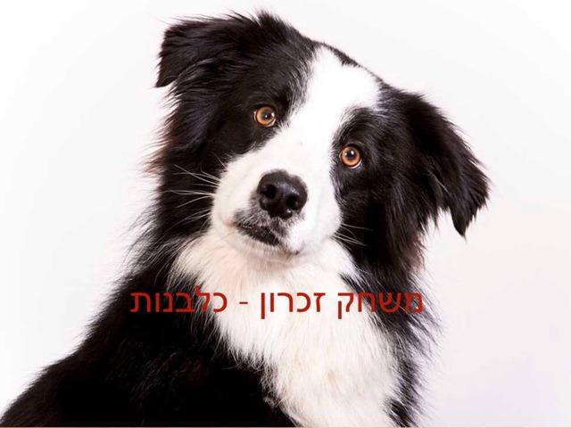 תומר קנצלר גלים by Tomer Kinzler